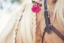 Horse-Grooming Tips and Ideas / Be it clipping, batheing, mane care or brightening white markings, we cover how to get your horse looking his best with these horse-grooming secrets.