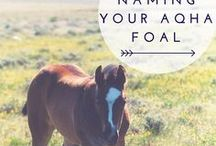 Fun Foal Names / Check out some lists of fun AQHA registered Quarter Horse names and perhaps find inspiration for your new foal.