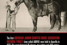 AQHA Youth & Young Adults / Learn about youth involvement and opportunities available through the American Quarter Horse Association.  / by American Quarter Horse Association (AQHA)