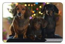 Doxies World / For the love of Dachshunds! Our inspiration: Daisy Mae, Molly Sue & new baby Lilly Lou!  Check out our blog: www.mydoxieshop.com Twitter & Instagram: @MyDoxieShop Facebook & Pinterest: MyDoxieShop