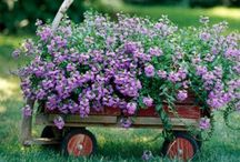 Dig It!! ~ Gardening / All things gardening  / by Janis Hueftle