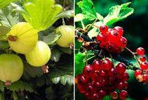 Jardinería & Cultivos / by Isaura Galdames