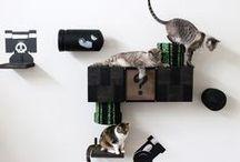 Cani e gatti in casa