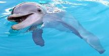 Winter the Dolphin / Exclusive Pictures of Winter Dolphin, Star of the Movie Dolphin Tale and Dolphin Tale 2!