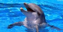 Hope the Dolphin / Hope the Dolphin, Star of Dolphin Tale 2!