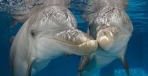 Winter & Hope Dolphins / Introducing the stars of Dolphin Tale 2! Winter the dolphin and Hope the dolphin.