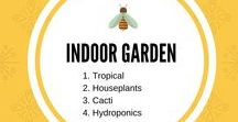 "Indoor Gardening / I love to garden indoors in the winter. My husband and I built a greenhouse a few years ago to expand my ""indoors.""   If you'd like to be a contributor to this group please drop me a line at JansPlayground1@gmail.com and let me know how long you've been growing things indoors."
