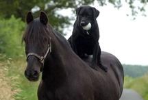 Horses are my JOY!!!!! / Horses of course.   / by Pamela Ulmer