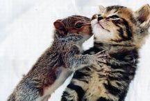 FURRY FRIENDS / …animals...