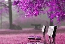 Gardens & Flowers  / Lovely