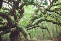 Trees / Beautiful, big or ancient trees.