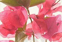 Botanical Garden of Mine / by Marsha