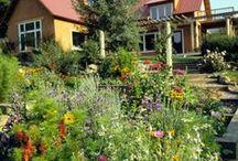 Gardening in Colorado / by Darien Wilson