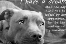Misunderstood !!! / I have learned from my own experience that Pit Bulls are some of the most loving dogs that you will find & have been given a bad rap that they do not deserve ! / by Christina Warren