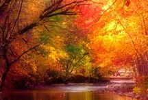 Fall / by Tonia Walker