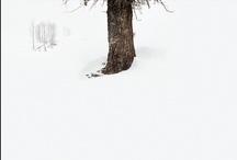shutter / photography