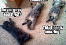 Kitty Cats / I love cats / by Heather