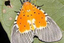Moths for soft sculpture/beading