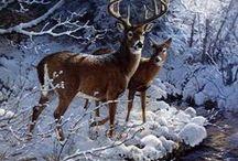 Zima i jej piękno