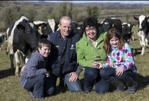 Our Farm / Farming, our dairy farm in Ireland, Irish dairy farming,  / by Lorna Sixsmith