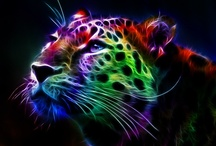 Colors 2-Animals / by Barbara Binda