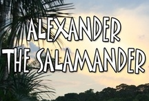 "Alexander the Salamander / The first book in the World Adventurers for Kids Series, ""Alexander the Salamander"" is about a salamander named Alexander living in the Amazon who joins his friends Airey the Butterfly and Terry the Tarantula on an unforgettable jungle adventure. Set in the Amazon region of Brazil, the story teaches children the importance of listening to teachers and other authority figures. ""Alexander the Salamander"" was released in May 2011 and is available at www.mgedwards.com. / by M.G. Edwards"