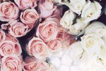 Flowers. Beauty. Colors.