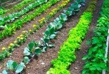 GARDEN / The Deliberate Mom & Garden. Ideas, inspiration and tips to grow and maintain a garden.