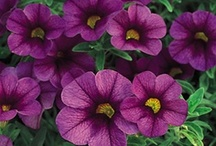 C - Guide to Summer Annuals with TOPIARIUS / Need to understand which plants are what? Here's a guide to help you visualize.