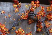 A - C Guide to Fall Annuals