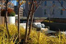 TOPIARIUS Downtown Oasis / TOPIARIUS Design & Installation (Summer/Fall 2014) For full project information, visit: http://www.topiarius.com/portfolio/downtown-oasis/