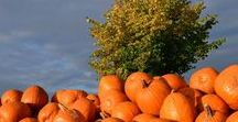FALL / Fall is my favourite time of year. On this board, you'll find all things fall and autumn. Thanksgiving ideas, Halloween tips and tricks, fall decor, and much more!