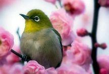 (Native) Birds Birds Birds / Birds native to New Zealand