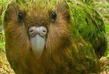 Kaaaakaaapoooo (and ideas for Kakapo stall)