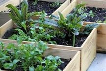 Green thumbs / Garden inspiration, tips and ideas to let your plants grow.