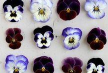 Flowery / by Thais Mazelli