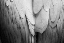 Feathers, Birds, Butterflies