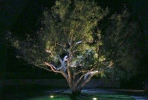 #LED landscape lighting in Orange County / LED landscape and outdoor lighting is the only way to accent architecture and landscapes. The economic and efficiency benefits are amazing. Save Green by going Green.  949-455-9914 www.colights.com Orange County landscape lighting will never be the same. OClights.com