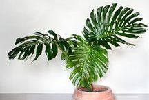 Indoor Plants / Indoor greenery to inspire even the smallest urban apartment to enjoy plants at home.