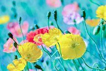 Fotos Blumen