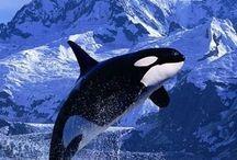Animals (water world)