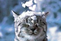 Snow is Fun!