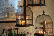Love of birdcages