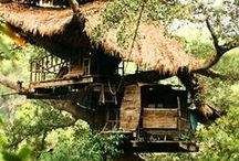 ARCHITECTURE | TREE HOUSE