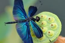 ANIMALIA | BUTTERFLY & DRAGONFLY