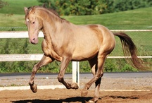 Interesting Horse Colors / by ilovehorses.net
