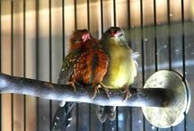 God's beautiful birds.  / Love birds. They are beyond beautiful. I'm always amazed by their beauty and song.