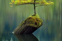 #power of nature