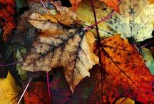 Autumn / by Sam Murillo