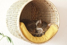 Pets/My cats / by Luna Noel Seawolf
